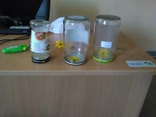Warsztaty ekologiczne w grupie Motylków